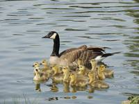 Family Fun At The Pond
