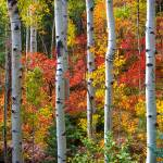 Leaves Of Autumn by David Halpern Prints & Posters