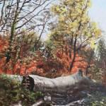 Fallen trees on Southampton Common during Autumn Prints & Posters