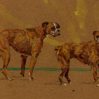 Boxer Dogs Art Prints & Posters by Michael Edens
