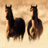 Wild Horses in High Grass by I.M. Spadecaller