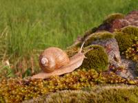 Snail on moss in spring