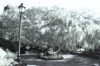 Digital Infra-Red , Botanic garden Singapore