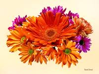Mixed Bouquet With Gerbera Daisy and Mums