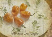 ORL-4991-2 Habanero chili pepper