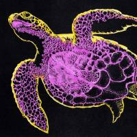 """Turtle-Orchid"" by OgleWarfield"
