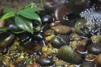 Rocks in Water with Leaves