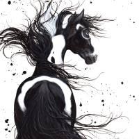 """Black ; White Pinto"" by AmyLynBihrle"