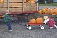 Kids Picking a Pumpkin