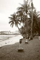 Tropic nature monochrome - coconut tree
