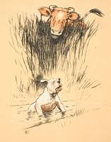 Bull and dog in field