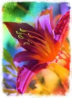Daylily Delight best by Carol Groenen