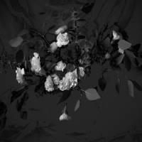 White Roses by Patricia Schnepf