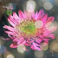 Summer Dreaming by Carol Groenen
