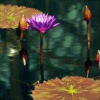 Tropical Waterlily Elegance