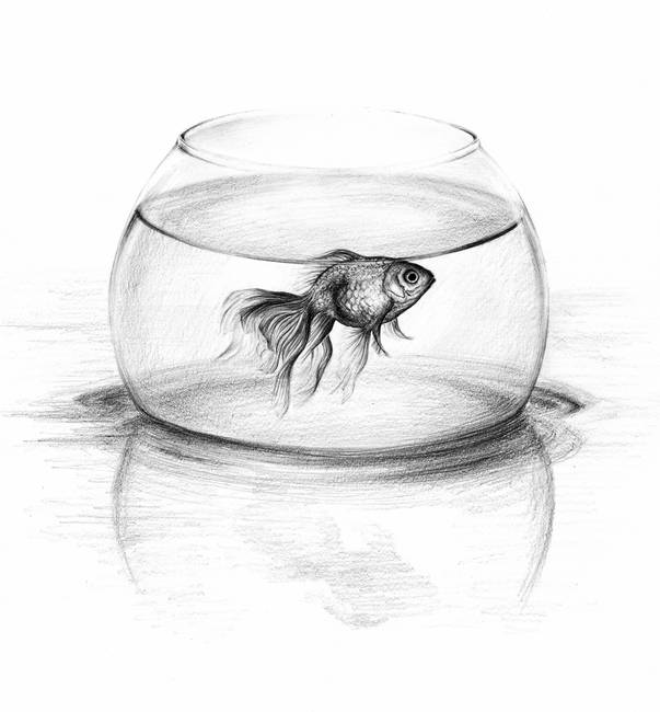 Drawing Aquarium Pencil Drawings And Illustrations For Sale On