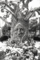 Black and white photograph of smiling tree