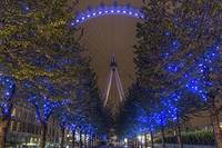 Trees in London Eye Park lit up in Blue