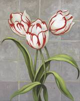 Red-Striped Tulips