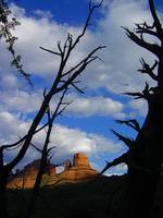 Sedona Shadow Tree