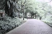 Digital Infra-red, Fort Canning Park Singapore