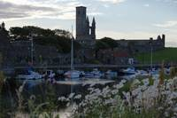 St Andrews Harbour and White Flowers
