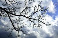 Bare Tree Branches, Cloudy Sky