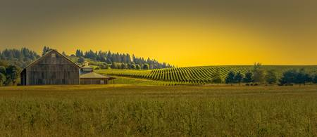 Vineyard Morning