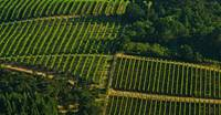 Vineyard Geometry