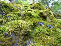 Mossy Delight