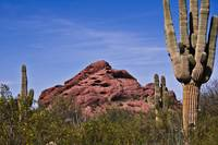 The Saguaro Cacti and Red Rocks