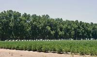 Keo Pecan Orchard, Hay and Soybean Field