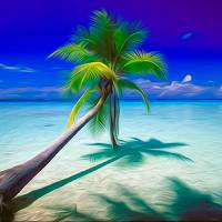 Lone Palm Tree by John Tribolet
