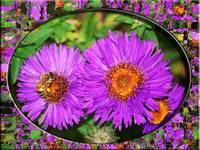 pinkish redish flowers with bee and frame glass 4