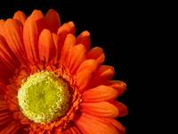 fun_orange_flower