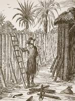 Robinson Crusoe building his bower