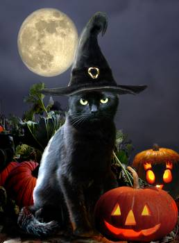 Black Halloween Cat With Witch Hat By Gina Femrite