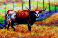 Day Of The Dead Longhorn