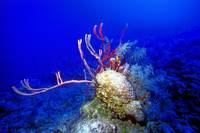 Caribbean Reef: Still Pristine At - 50m