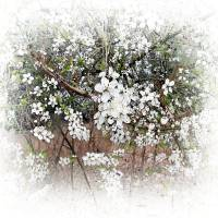 Tree with White Flowers by Patricia Schnepf