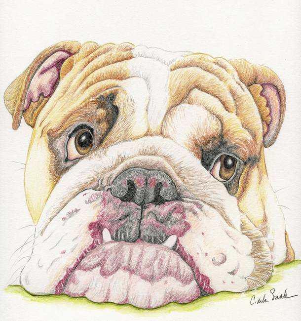 "Contemporary ""English Bulldog"" Artwork For Sale on Fine ..."