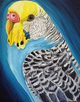 Budgie Bird Art