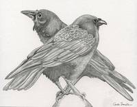 Crow Raven Wildlife Bird Art