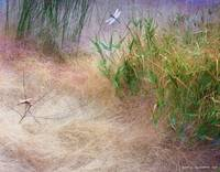 muhly grass textures with dragon flies
