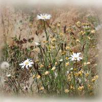 Wildflowers in the Meadow by Patricia Schnepf
