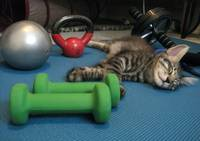 Mikino doesn't workout on Caturday's!