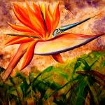 Bird of Paradise by Kris Courtney