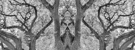 MIRRORED TREES, V.22, Edit C, in BW