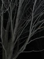 trees in the night