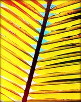 Palm Leaf Photography